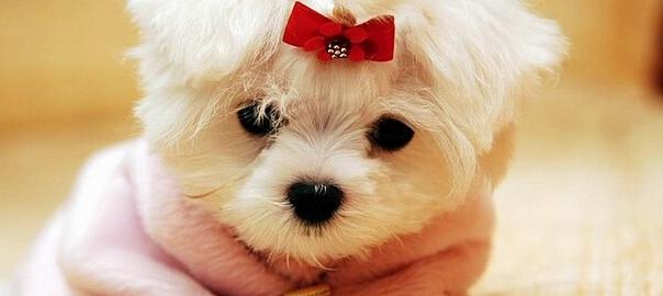 Maglia Estiva Sottile in Cotone per Vestiti per Cani Pet Puppy Dog Cat Vest Shirt Vestiti per Animali Domestici Cat Abbigliamento Abbigliamento per Small/Medium/L LAYYY Cute Pet Dog Cat T-Shirt