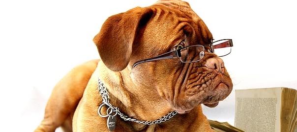 hot sales 90712 0f9fb Mangiatoia automatica per cani